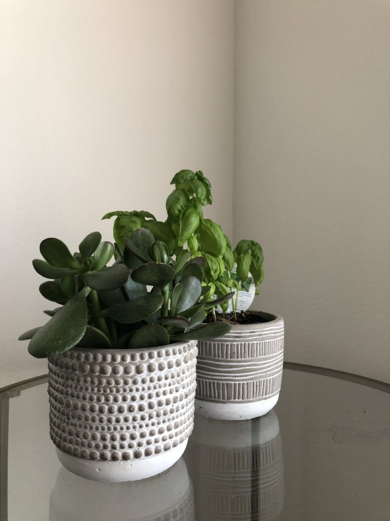 Jade and Basil Plant
